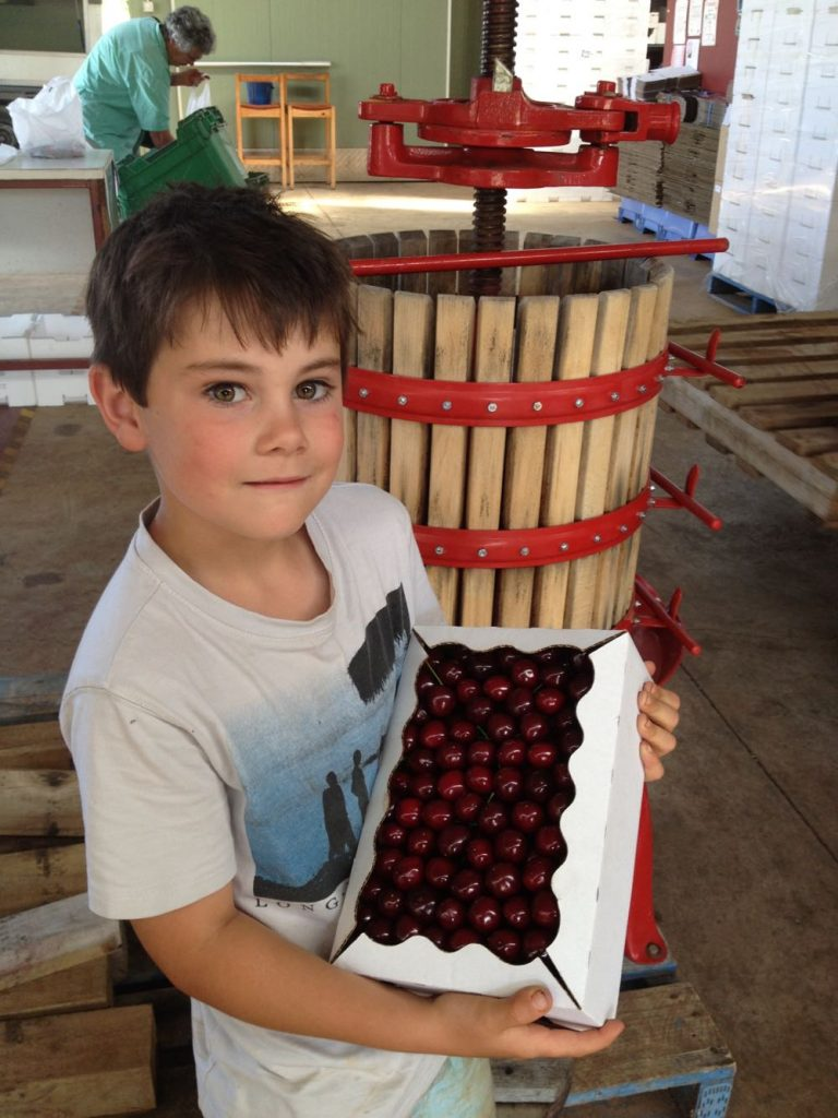 pick cherries lanidale cherry orchard victoria yarra valley